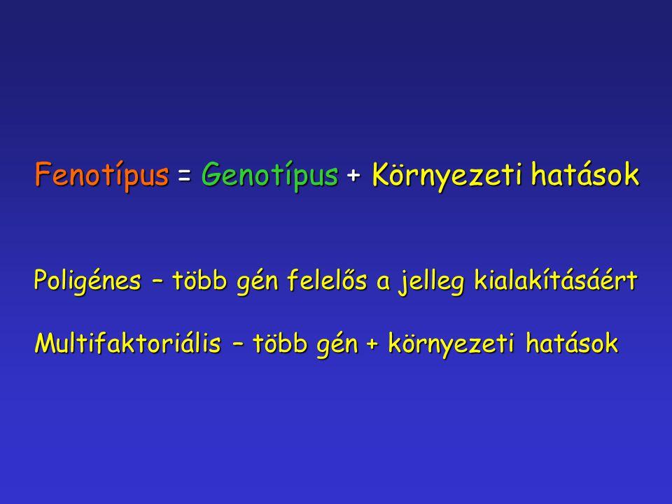 Fenotípus = Genotípus + Környezeti hatások Poligénes – több gén felelős a jelleg kialakításáért Multifaktoriális – több gén + környezeti hatások