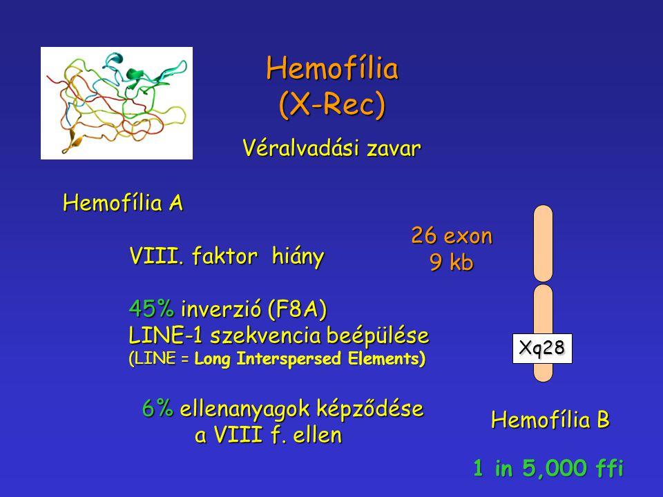 Hemofília (X-Rec) Véralvadási zavar Hemofília A VIII. faktor hiány 45% inverzió (F8A) LINE-1 szekvencia beépülése (LINE = Long Interspersed Elements)