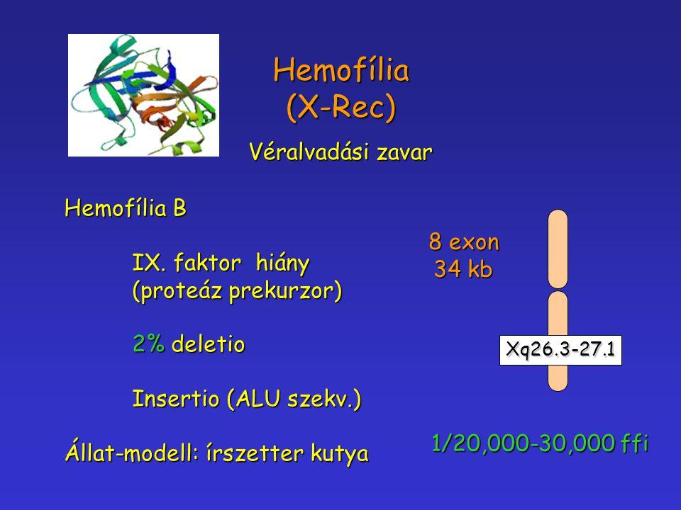 Hemofília (X-Rec) Véralvadási zavar Hemofília B IX. faktor hiány (proteáz prekurzor) 2% deletio Insertio (ALU szekv.) Állat-modell: írszetter kutya Xq