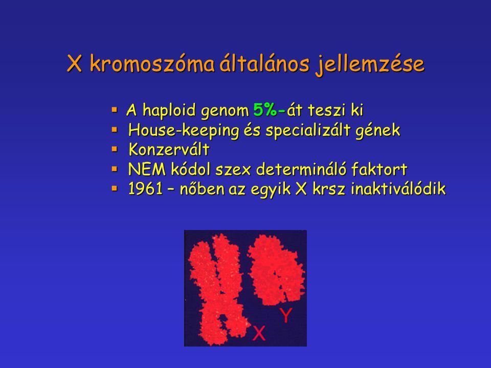 X kromoszóma általános jellemzése  A haploid genom 5%-át teszi ki  House-keeping és specializált gének  Konzervált  NEM kódol szex determináló fak