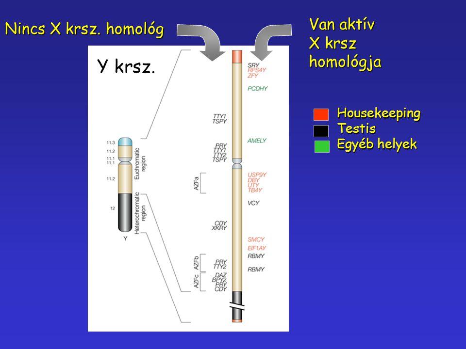 Van aktív X krsz homológja Nincs X krsz. homológ HousekeepingTestis Egyéb helyek Y krsz.