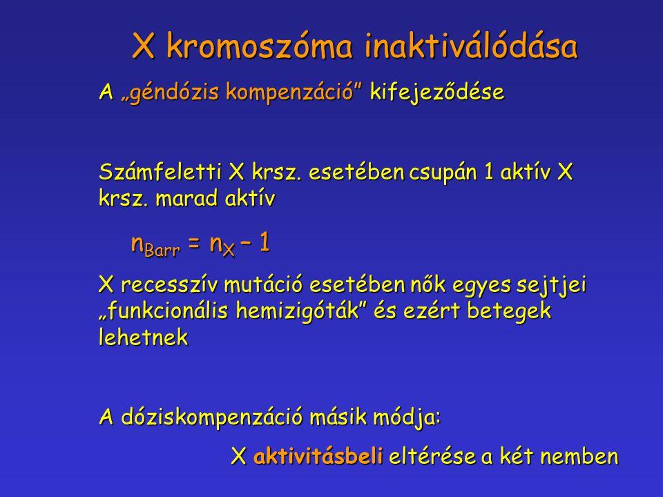 """A """"géndózis kompenzáció"""" kifejeződése Számfeletti X krsz. esetében csupán 1 aktív X krsz. marad aktív n Barr = n X – 1 n Barr = n X – 1 X recesszív mu"""
