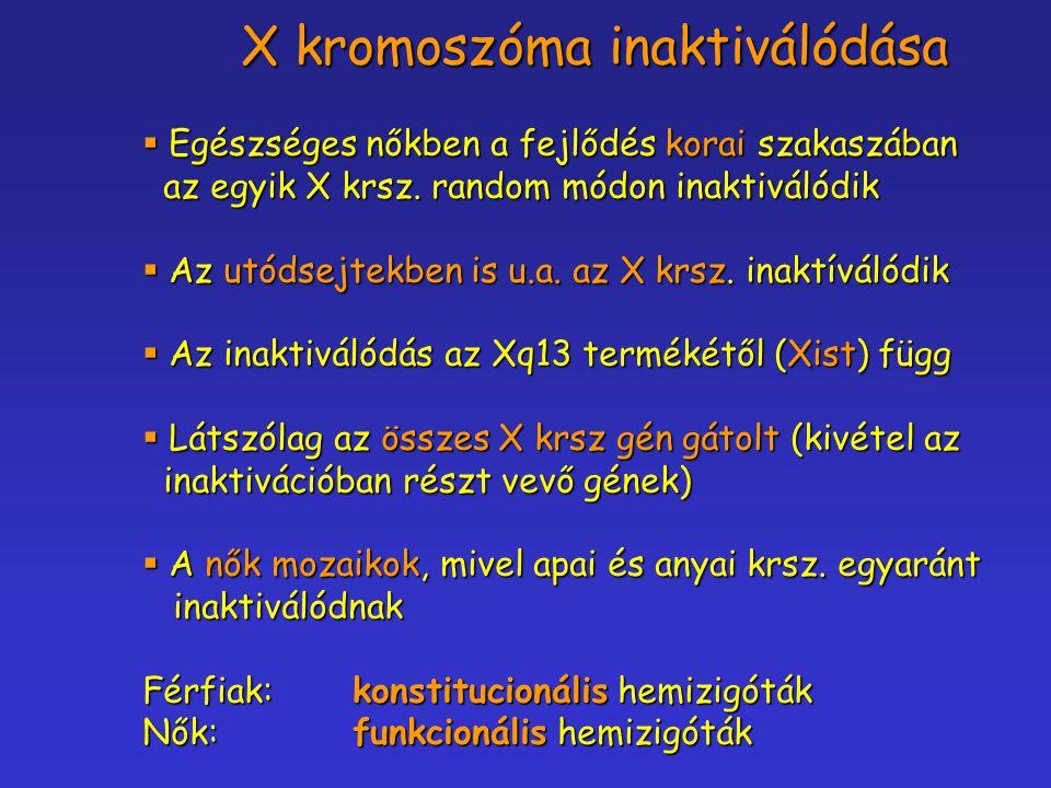 X kromoszóma inaktiválódása  Egészséges nőkben a fejlődés korai szakaszában az egyik X krsz. random módon inaktiválódik az egyik X krsz. random módon