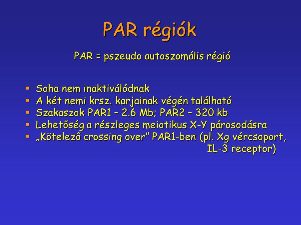 PAR régiók PAR = pszeudo autoszomális régió  Soha nem inaktiválódnak  A két nemi krsz. karjainak végén található  Szakaszok PAR1 – 2.6 Mb; PAR2 – 3