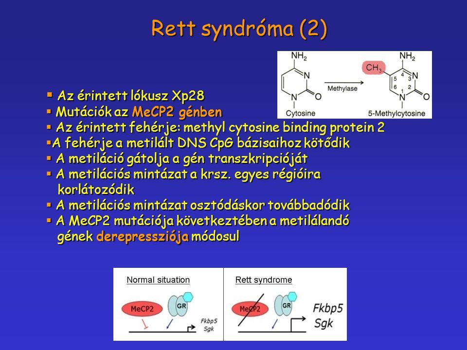  Az érintett lókusz Xp28  Mutációk az MeCP2 génben  Az érintett fehérje: methyl cytosine binding protein 2  A fehérje a metilált DNS CpG bázisaiho