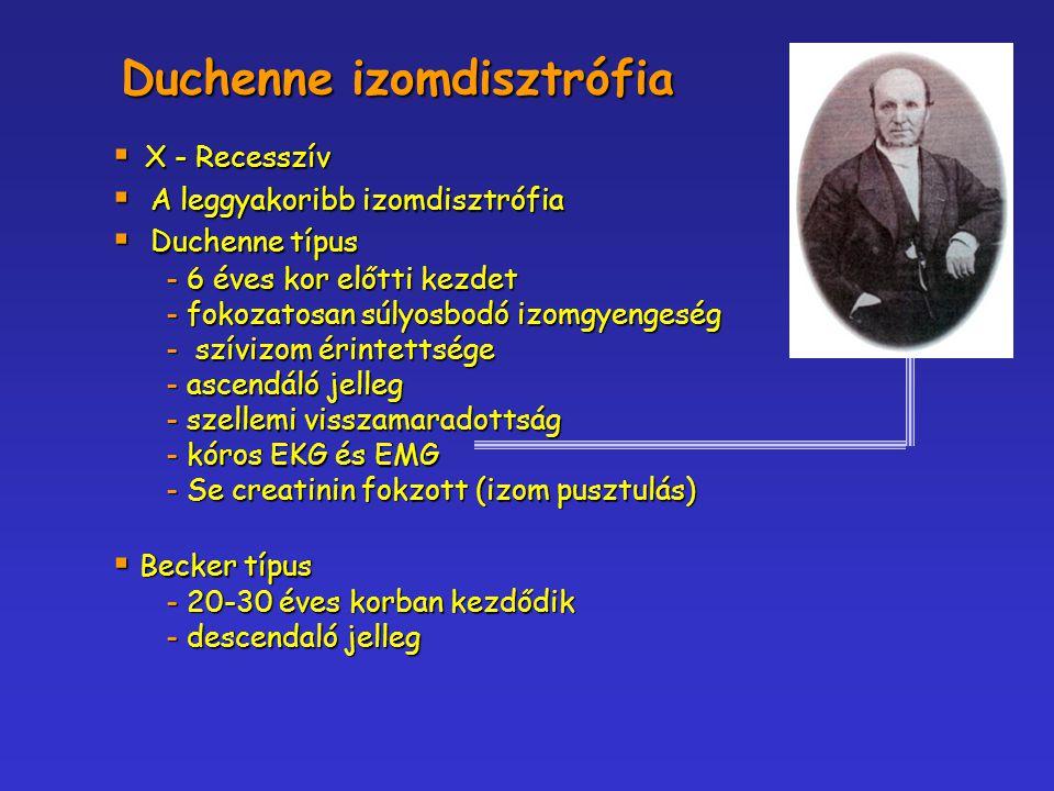  X - Recesszív  A leggyakoribb izomdisztrófia  Duchenne típus - 6 éves kor előtti kezdet - fokozatosan súlyosbodó izomgyengeség - szívizom érintett