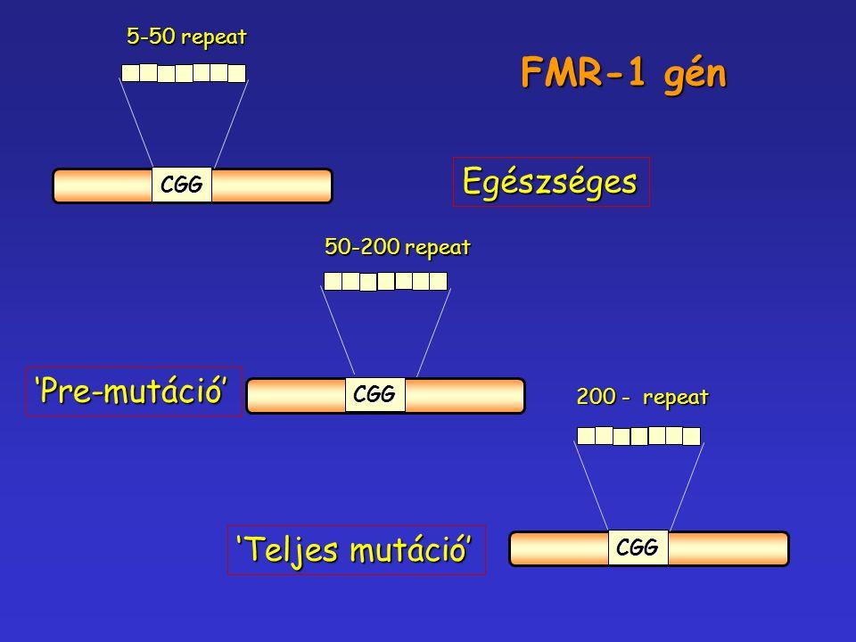 CGG CGG 5-50 repeat CGG 50-200 repeat 200 - repeat Egészséges 'Pre-mutáció' 'Teljes mutáció' FMR-1 gén