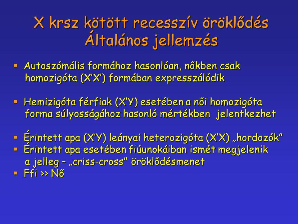 X krsz kötött recesszív öröklődés Általános jellemzés  Autoszómális formához hasonlóan, nőkben csak homozigóta (X'X') formában expresszálódik homozig