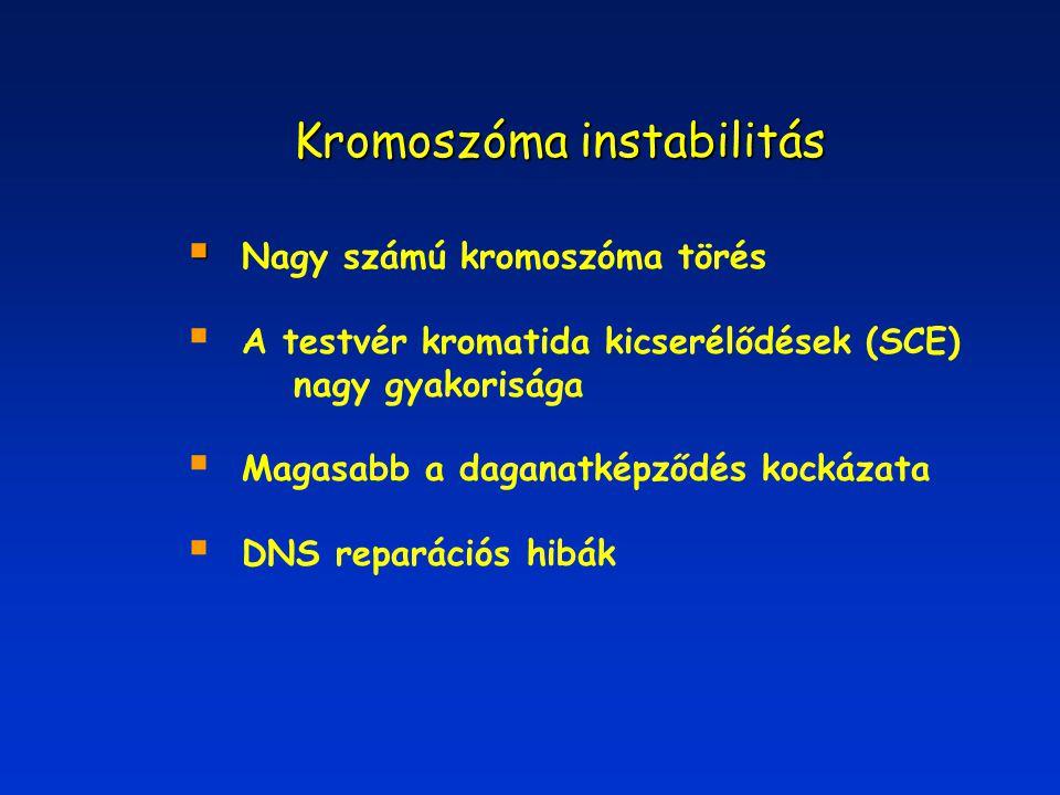 Kromoszóma instabilitás   Nagy számú kromoszóma törés  A testvér kromatida kicserélődések (SCE) nagy gyakorisága  Magasabb a daganatképződés kocká