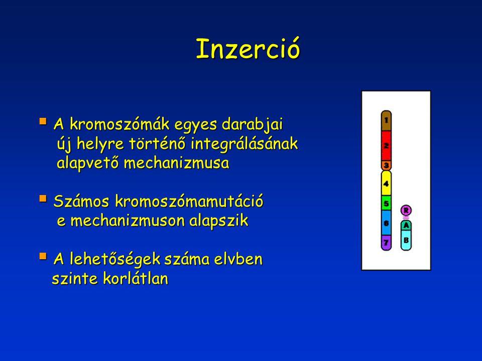 Inzerció  A kromoszómák egyes darabjai új helyre történő integrálásának új helyre történő integrálásának alapvető mechanizmusa alapvető mechanizmusa