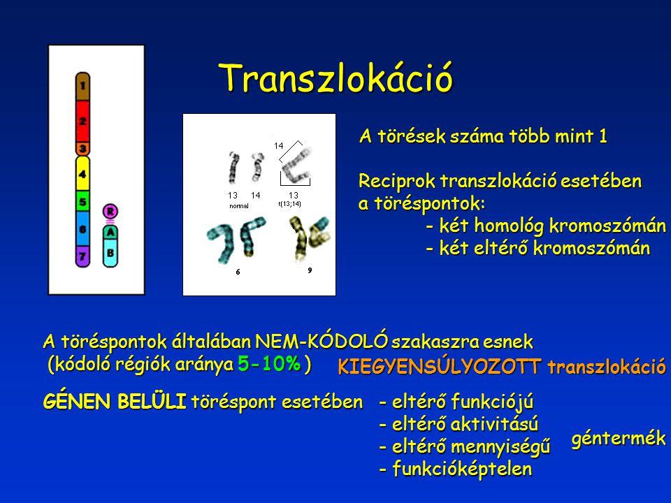 Transzlokáció A törések száma több mint 1 Reciprok transzlokáció esetében a töréspontok: - két homológ kromoszómán - két eltérő kromoszómán A töréspon
