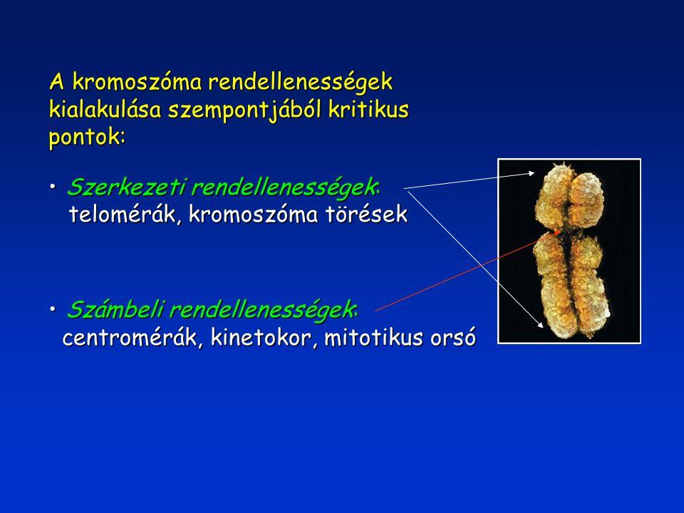 Inzerció  A kromoszómák egyes darabjai új helyre történő integrálásának új helyre történő integrálásának alapvető mechanizmusa alapvető mechanizmusa  Számos kromoszómamutáció e mechanizmuson alapszik e mechanizmuson alapszik  A lehetőségek száma elvben szinte korlátlan szinte korlátlan
