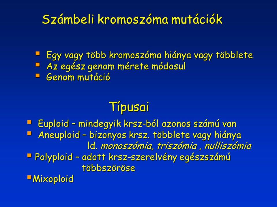 Számbeli kromoszóma mutációk  Egy vagy több kromoszóma hiánya vagy többlete  Az egész genom mérete módosul  Genom mutáció Típusai  Euploid – minde