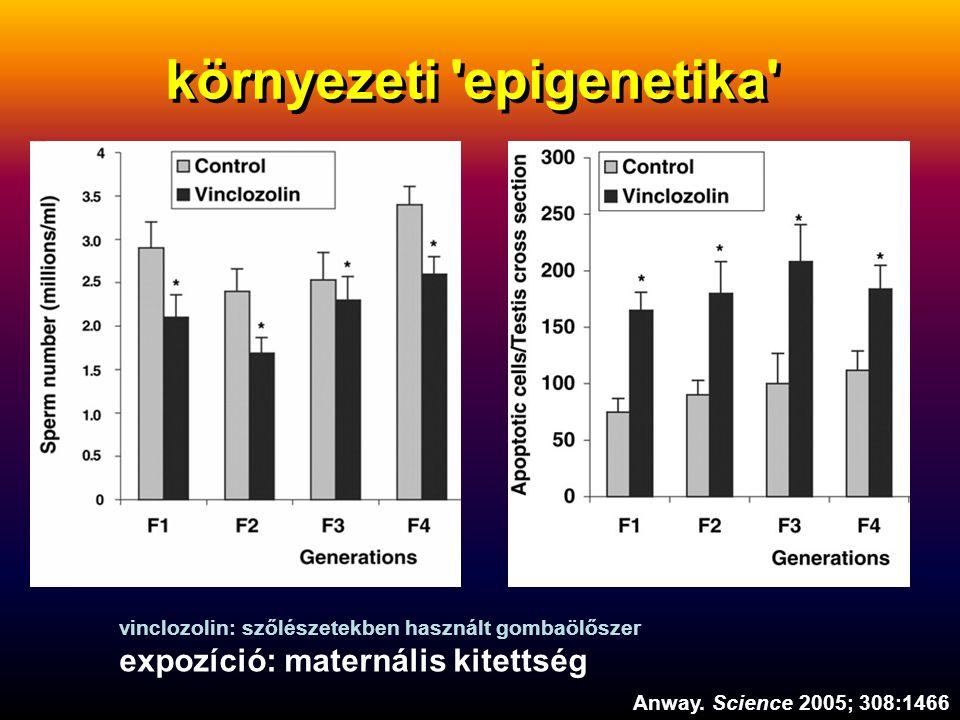 környezeti 'epigenetika' Anway. Science 2005; 308:1466 vinclozolin: szőlészetekben használt gombaölőszer expozíció: maternális kitettség