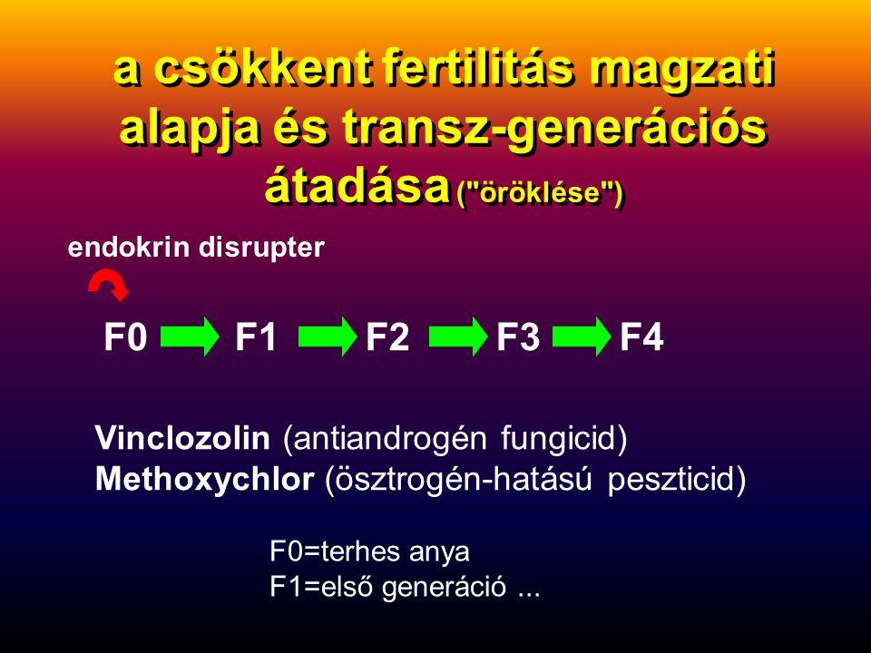 a csökkent fertilitás magzati alapja és transz-generációs átadása ( öröklése ) endokrin disrupter F0F1F2F3F4 Vinclozolin (antiandrogén fungicid) Methoxychlor (ösztrogén-hatású peszticid) F0=terhes anya F1=első generáció...