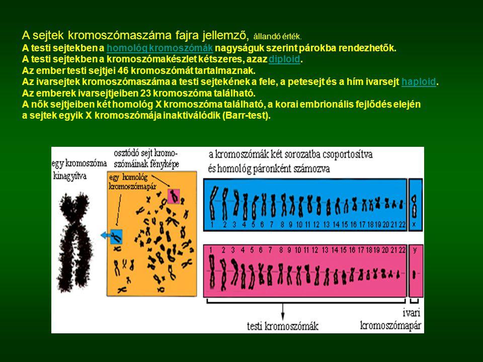 A sejtek kromoszómaszáma fajra jellemző, állandó érték. A testi sejtekben a homológ kromoszómák nagyságuk szerint párokba rendezhetők.homológ kromoszó