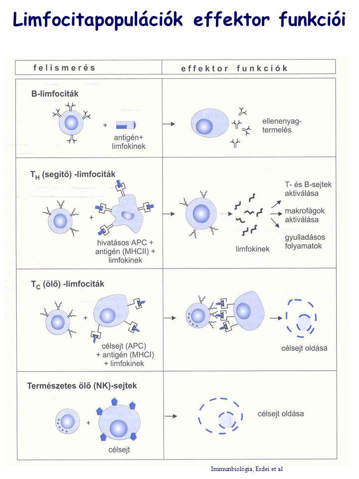 TERMÉSZETES IMMUNRENDSZER ADAPTÍV IMMUNRENDSZER PATOGÉNEK INVÁZIÓJA Szolubilis elemek: CRP, SAP, MBL, komplement rendszer Barrierek: bőr, nyálkahártya NK sejtek Ellenanyag- közvetített immunitás (B sejtek) Sejt- közvetitett immunitás (T sejtek) FagocitákCD5+B sejtek  /  T sejtek Sejtes elemek A természetes és az adaptív immunrendszer