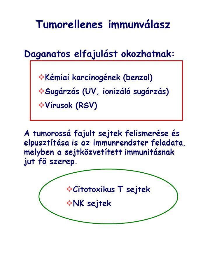 Toxikus vegyi anyagImmunológiai eltérés RágcsálóbanEmberben 2,3,7,8-tetrakloro-dibenzo- dioxin (TCDD) ++ Poliklórozott bifenilek (PCB) ++ Polibrómozott bifenilek (PBB) ++ Hexaklórbenzol ++ Diklór-difenil-triklórmetán (DDT) ++ Benz(a)pirén + nem ismert 7,12-dimetilbenz(a)antracén + nem ismert Benzidin ++ Benzol, toluol, xilol ++ Ólom ++ Kadmium ++ Higany ++ NO 2 és ózon ++ Azbeszt ++ Dimetil-nitrózamin + nem ismert Dietil sztilbesztrol ++ Példák immuntoxikus anyagokra rágcsálóban és emberben