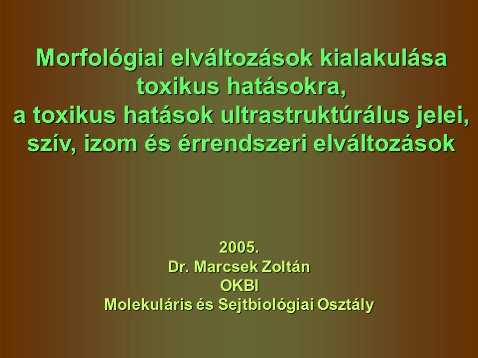 Morfológiai elváltozások kialakulása toxikus hatásokra, a toxikus hatások ultrastruktúrálus jelei, szív, izom és érrendszeri elváltozások 2005. Dr. Ma