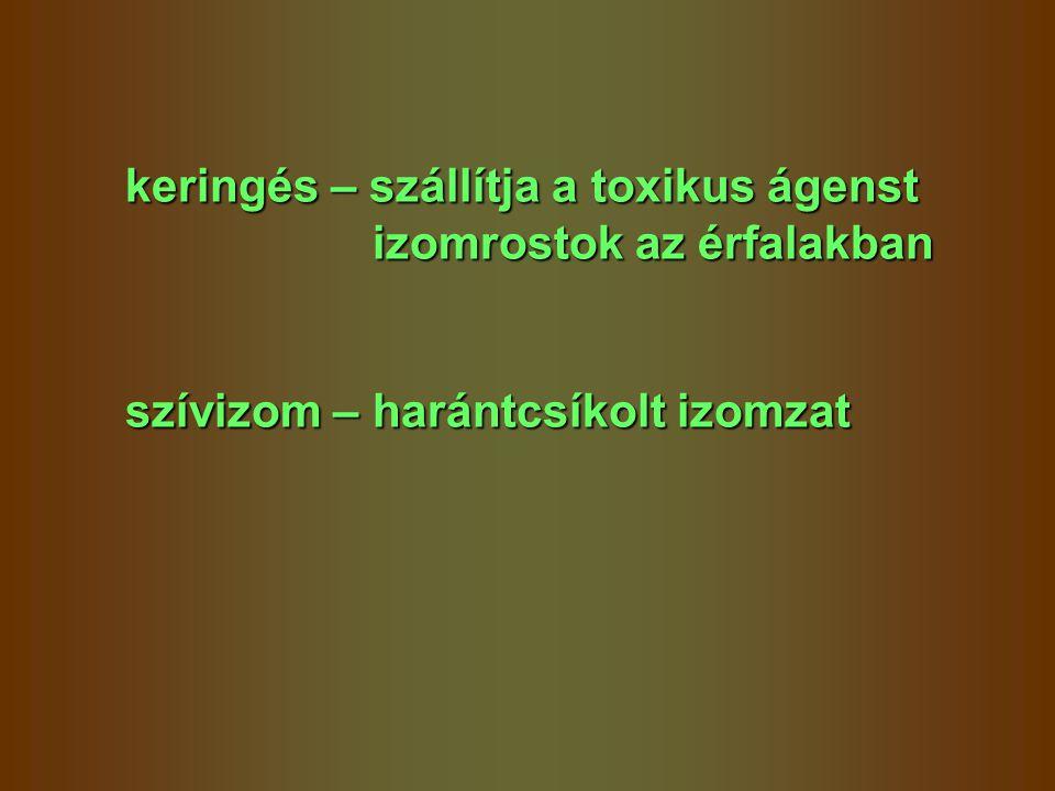 keringés – szállítja a toxikus ágenst izomrostok az érfalakban izomrostok az érfalakban szívizom – harántcsíkolt izomzat