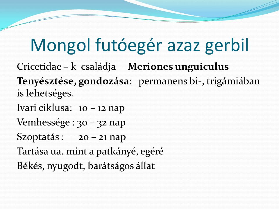 Mongol futóegér azaz gerbil Cricetidae – k családja Meriones unguiculus Tenyésztése, gondozása: permanens bi-, trigámiában is lehetséges. Ivari ciklus