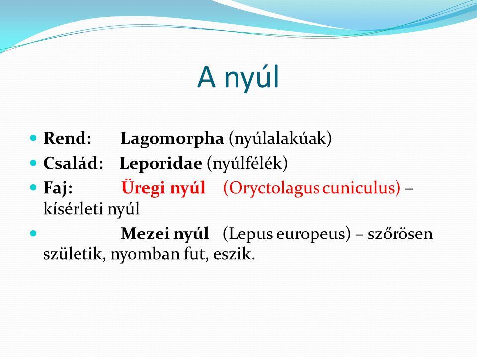 A nyúl Rend: Lagomorpha (nyúlalakúak) Család: Leporidae (nyúlfélék) Faj: Üregi nyúl (Oryctolagus cuniculus) – kísérleti nyúl Mezei nyúl (Lepus europeu