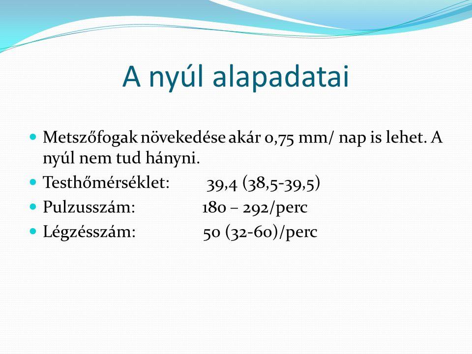 A nyúl alapadatai Metszőfogak növekedése akár 0,75 mm/ nap is lehet. A nyúl nem tud hányni. Testhőmérséklet: 39,4 (38,5-39,5) Pulzusszám: 180 – 292/pe