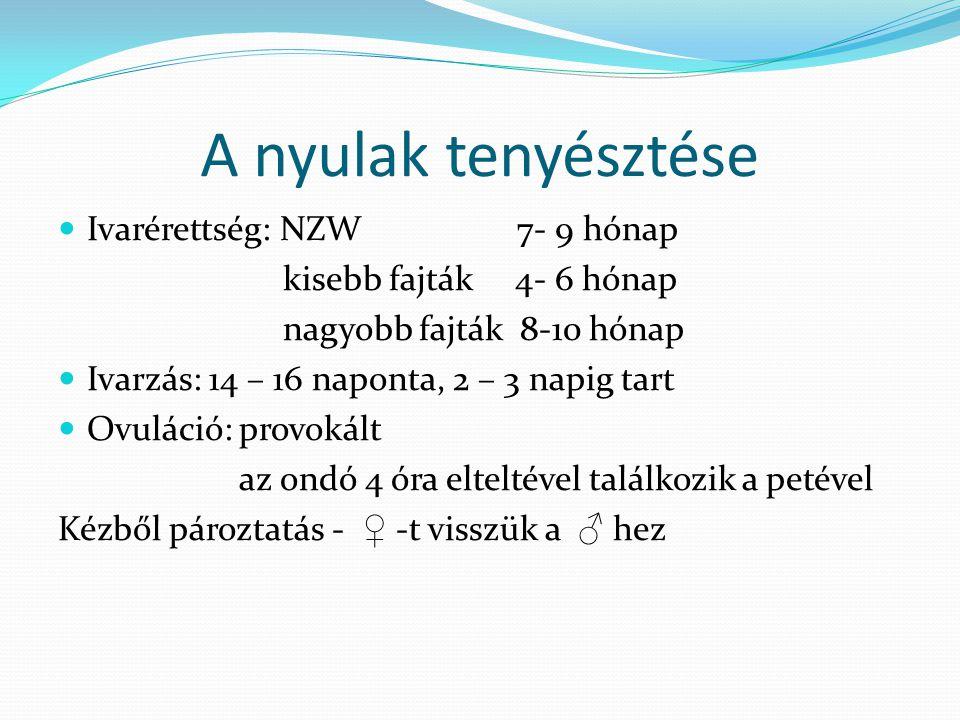 A nyulak tenyésztése Ivarérettség: NZW 7- 9 hónap kisebb fajták 4- 6 hónap nagyobb fajták 8-10 hónap Ivarzás: 14 – 16 naponta, 2 – 3 napig tart Ovulác
