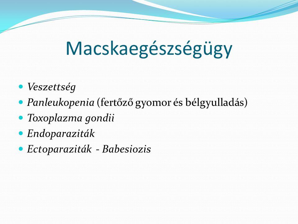 Macskaegészségügy Veszettség Panleukopenia (fertőző gyomor és bélgyulladás) Toxoplazma gondii Endoparaziták Ectoparaziták - Babesiozis