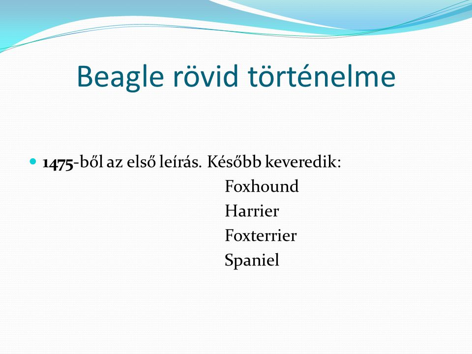 Beagle rövid történelme 1475-ből az első leírás. Később keveredik: Foxhound Harrier Foxterrier Spaniel