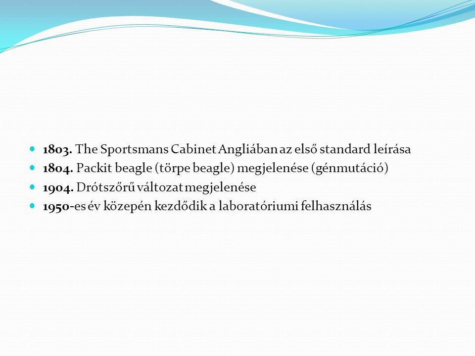 1803. The Sportsmans Cabinet Angliában az első standard leírása 1804. Packit beagle (törpe beagle) megjelenése (génmutáció) 1904. Drótszőrű változat m