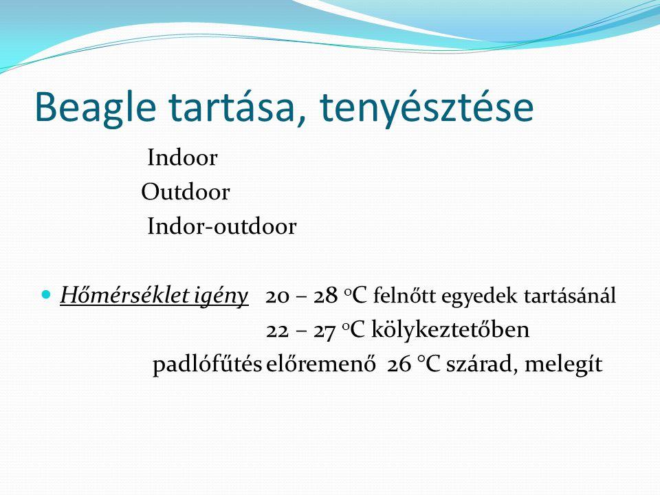 Beagle tartása, tenyésztése Indoor Outdoor Indor-outdoor Hőmérséklet igény 20 – 28 o C felnőtt egyedek tartásánál 22 – 27 o C kölykeztetőben padlófűté