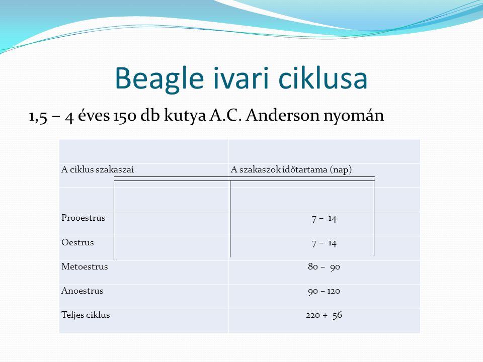 Beagle ivari ciklusa 1,5 – 4 éves 150 db kutya A.C. Anderson nyomán A ciklus szakaszaiA szakaszok időtartama (nap) Prooestrus7 – 14 Oestrus7 – 14 Meto