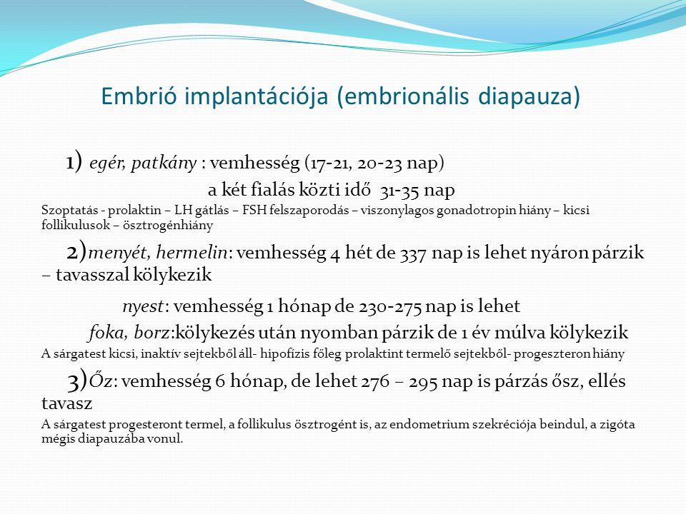 Embrió implantációja (embrionális diapauza) 1) egér, patkány : vemhesség (17-21, 20-23 nap) a két fialás közti idő 31-35 nap Szoptatás - prolaktin – L