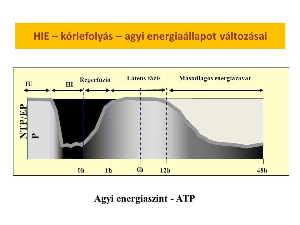 NTP/EP P IU Látens fázis HI Reperfúzió Másodlagos energiazavar 12h0h48h1h 6h Agyi energiaszint - ATP HIE – kórlefolyás – agyi energiaállapot változásai