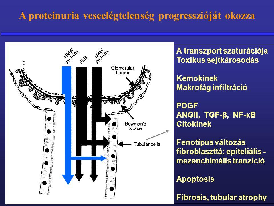 A proteinuria veseelégtelenség progresszióját okozza A transzport szaturációja Toxikus sejtkárosodás Kemokinek Makrofág infiltráció PDGF ANGII, TGF-β,