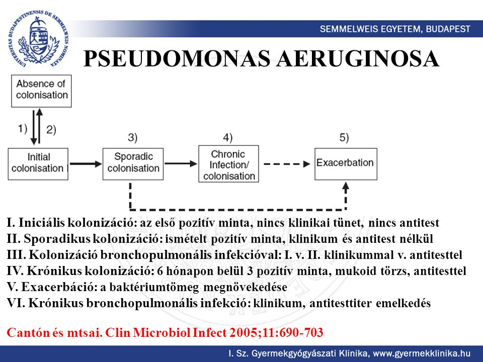 PSEUDOMONAS AERUGINOSA I. Iniciális kolonizáció: az első pozitív minta, nincs klinikai tünet, nincs antitest II. Sporadikus kolonizáció: ismételt pozi