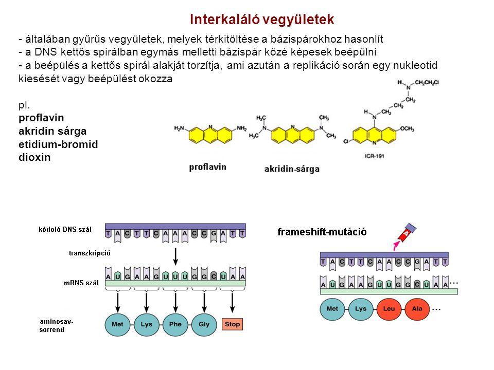 - általában gyűrűs vegyületek, melyek térkitöltése a bázispárokhoz hasonlít - a DNS kettős spirálban egymás melletti bázispár közé képesek beépülni -