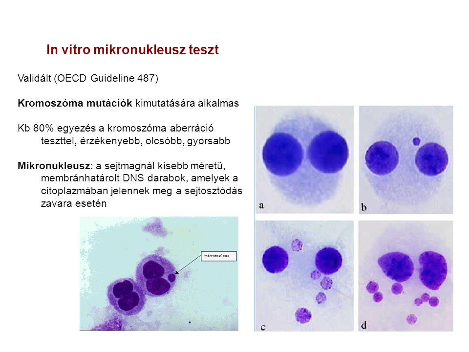 In vitro mikronukleusz teszt Validált (OECD Guideline 487) Kromoszóma mutációk kimutatására alkalmas Kb 80% egyezés a kromoszóma aberráció teszttel, é