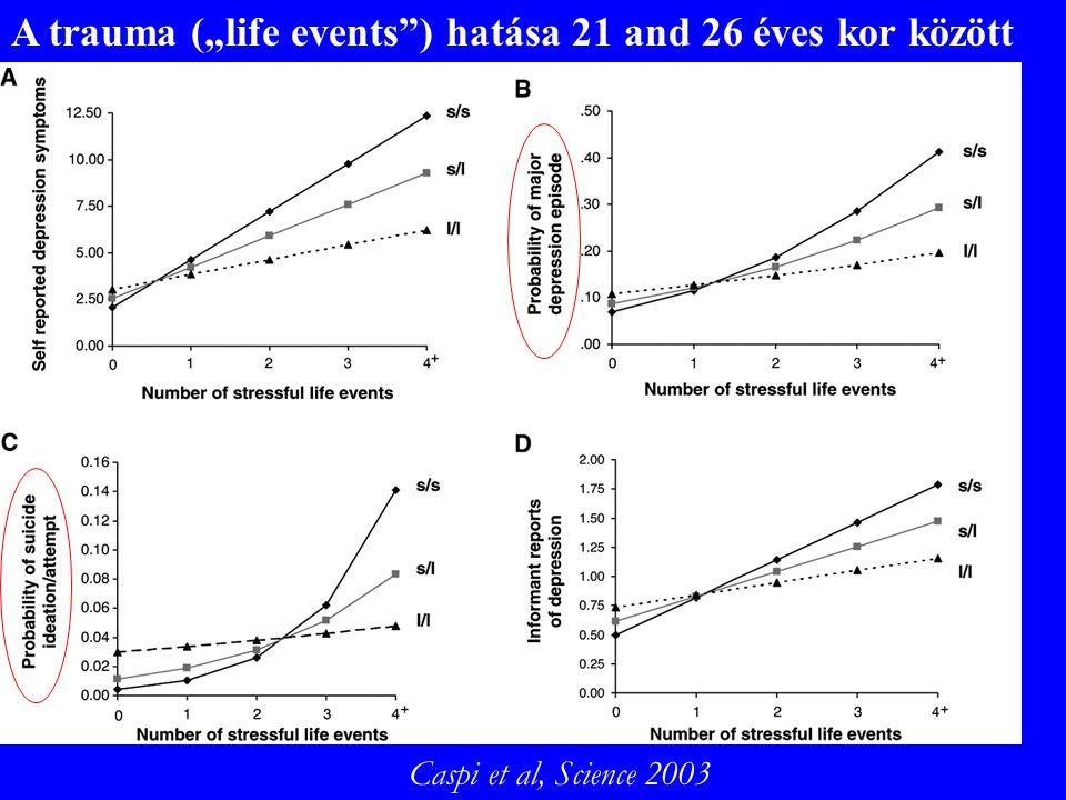"""A trauma (""""life events ) hatása 21 and 26 éves kor között Caspi et al, Science 2003"""