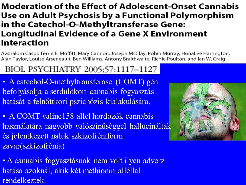 A catechol-O-methyltransferase (COMT) gén befolyásolja a serdülökori cannabis fogyasztás hatását a felnőttkori pszichózis kialakulására. A COMT valine