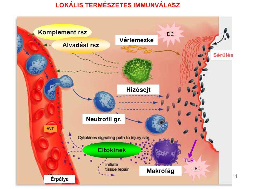 11 Komplement rsz Alvadási rsz DC TLR Sérülés Vérlemezke Hízósejt Neutrofil gr. Makrofág Érpálya VVT Citokinek LOKÁLIS TERMÉSZETES IMMUNVÁLASZ