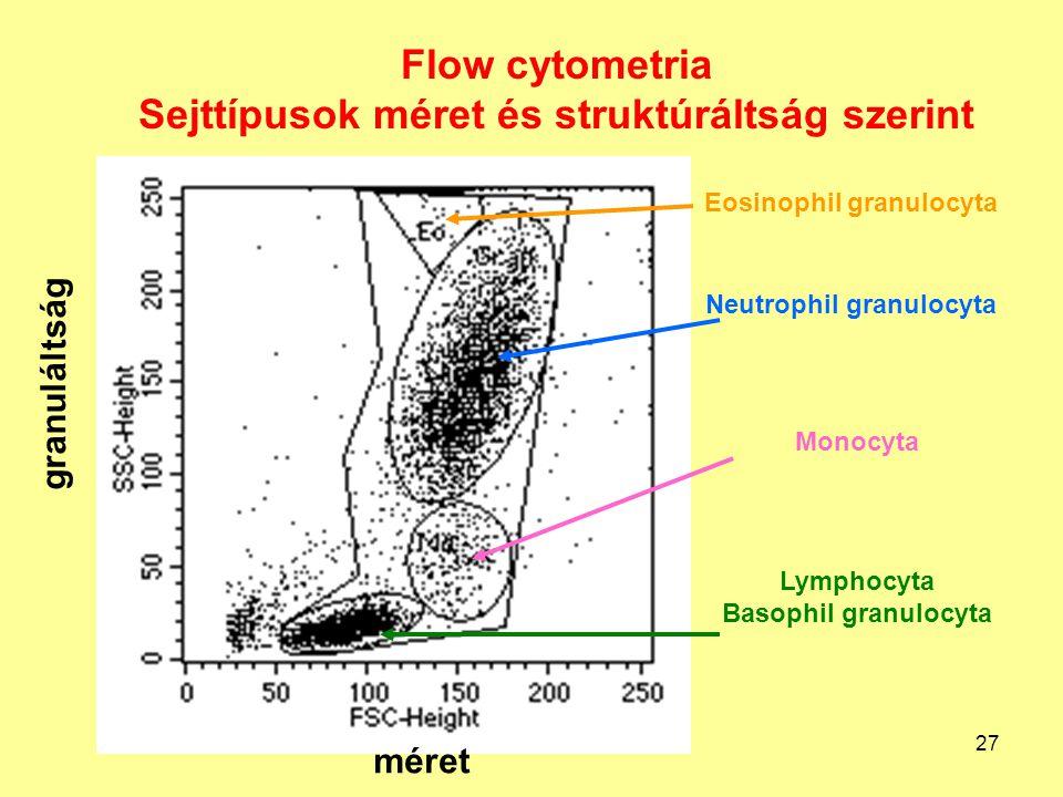 27 Flow cytometria Sejttípusok méret és struktúráltság szerint Lymphocyta Basophil granulocyta Monocyta Neutrophil granulocyta Eosinophil granulocyta