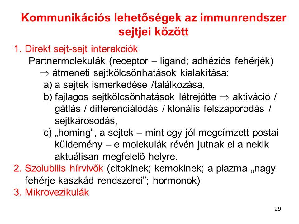 29 Kommunikációs lehetőségek az immunrendszer sejtjei között 1.Direkt sejt-sejt interakciók Partnermolekulák (receptor – ligand; adhéziós fehérjék) 