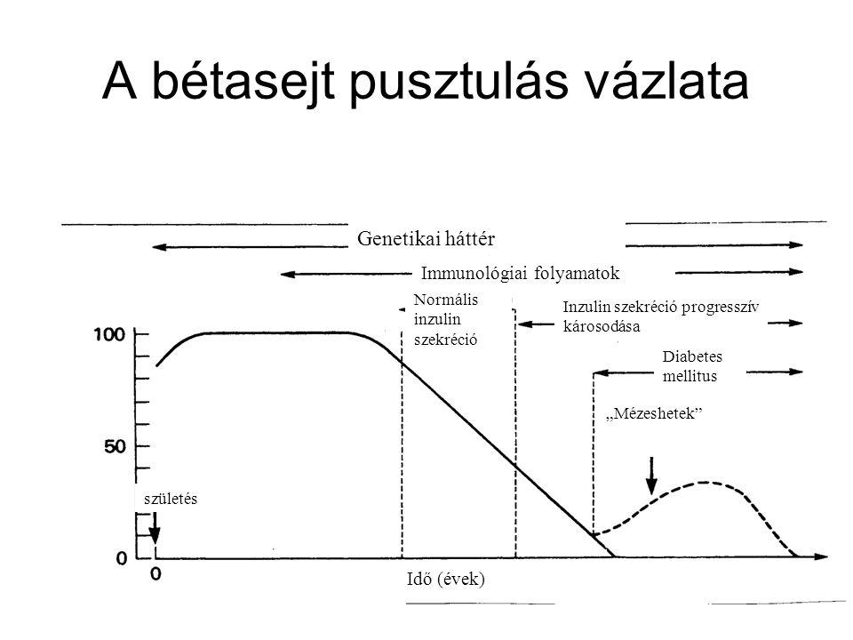 A bétasejt pusztulás vázlata Genetikai háttér Immunológiai folyamatok Normális inzulin szekréció Inzulin szekréció progresszív károsodása Diabetes mel