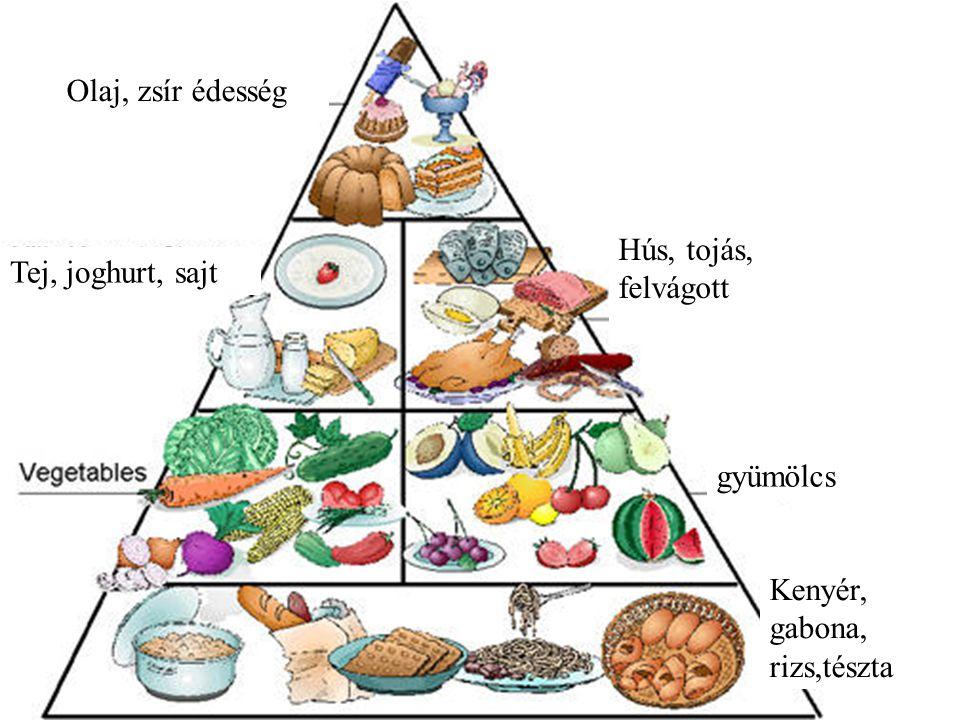 Olaj, zsír édesség Tej, joghurt, sajt Hús, tojás, felvágott gyümölcs Kenyér, gabona, rizs,tészta