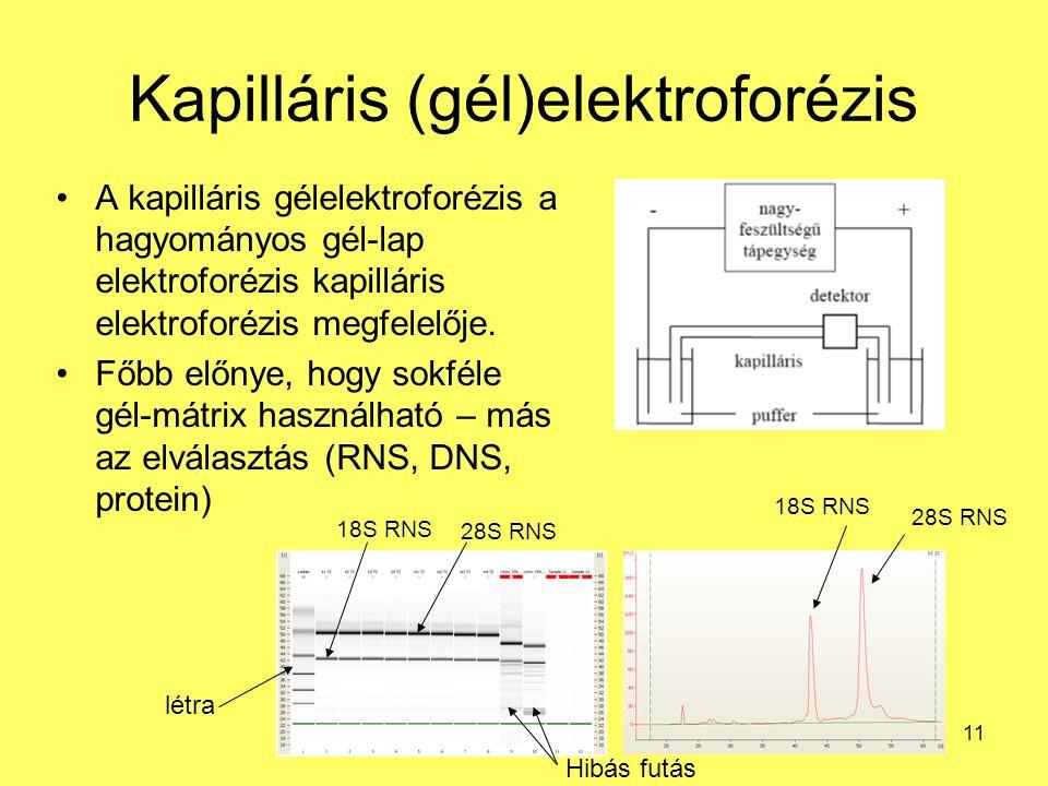 11 Kapilláris (gél)elektroforézis A kapilláris gélelektroforézis a hagyományos gél-lap elektroforézis kapilláris elektroforézis megfelelője. Főbb előn