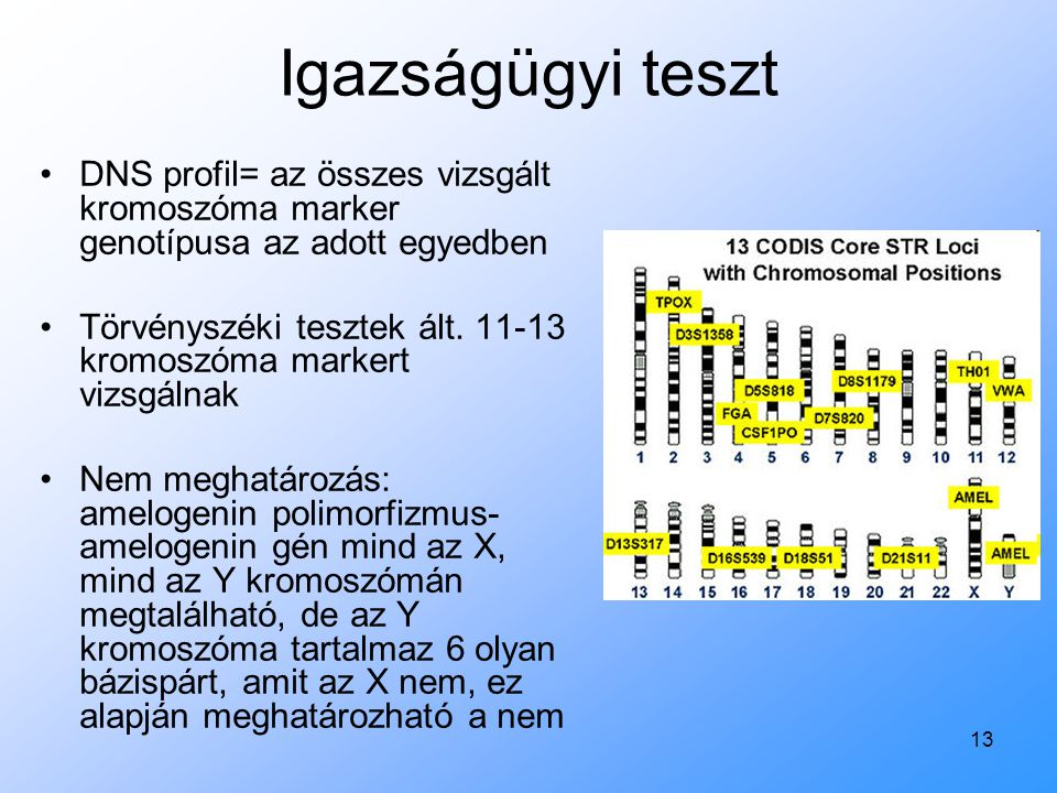 13 Igazságügyi teszt DNS profil= az összes vizsgált kromoszóma marker genotípusa az adott egyedben Törvényszéki tesztek ált. 11-13 kromoszóma markert
