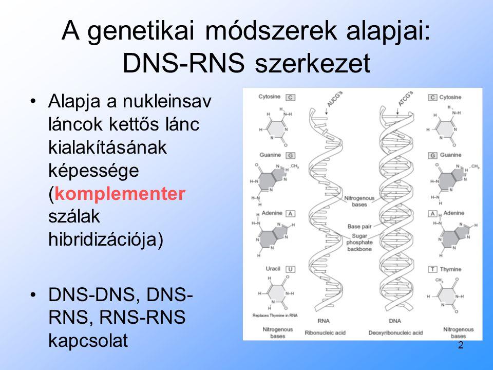 2 A genetikai módszerek alapjai: DNS-RNS szerkezet Alapja a nukleinsav láncok kettős lánc kialakításának képessége (komplementer szálak hibridizációja