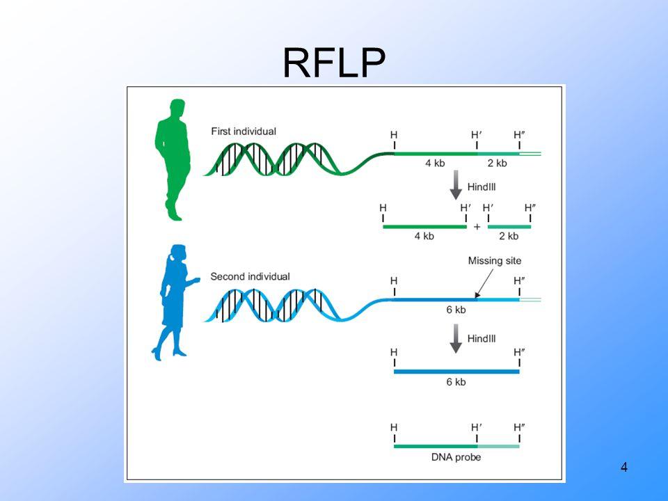4 RFLP